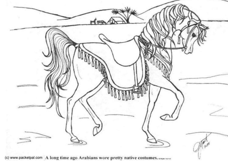 Kleurplaat Paard Gratis Kleurplaat Dressuur Afb 6087
