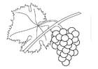 Kleurplaat druiven aan rank
