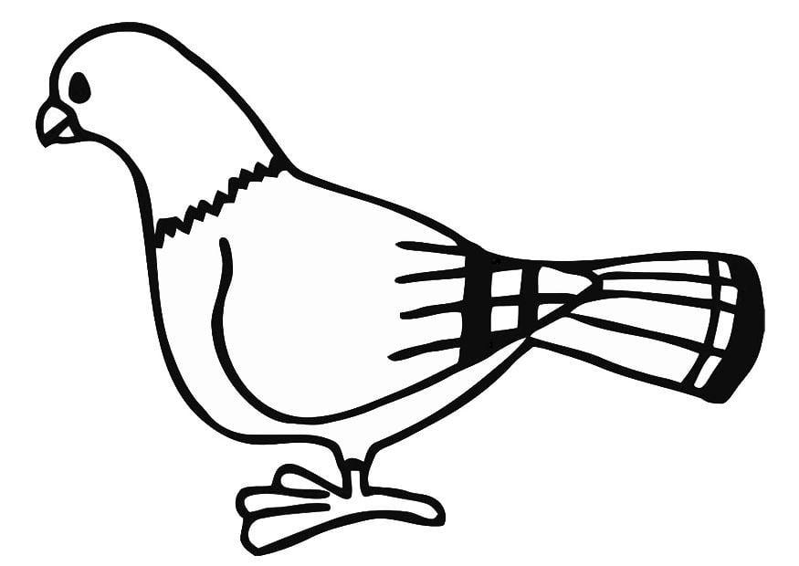 Kleurplaat duif afb 19390 images - Dessin pigeon ...