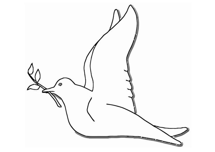 kleurplaat duif afb 19384