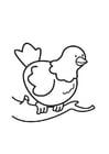 Kleurplaat duif