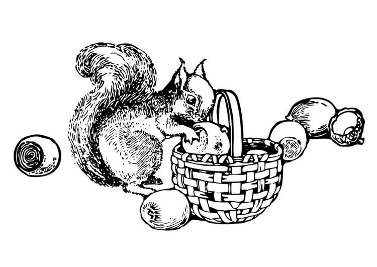 kleurplaat eekhoorn gratis kleurplaten om te printen