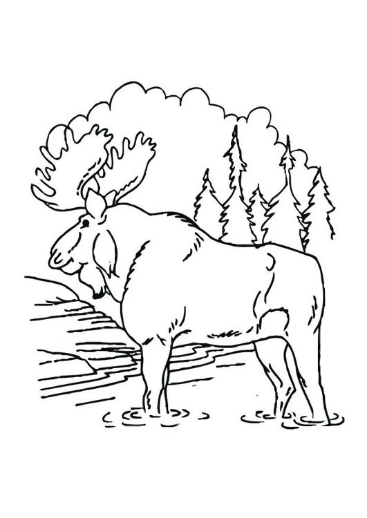 kleurplaat eland afb 12537