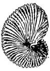 Kleurplaat fossiel