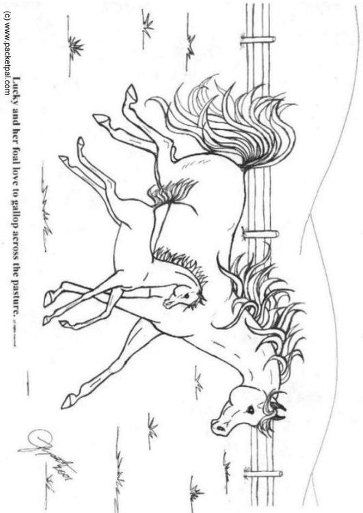 Kleurplaten Paarden In Galop.Kleurplaat Galop Afb 6089