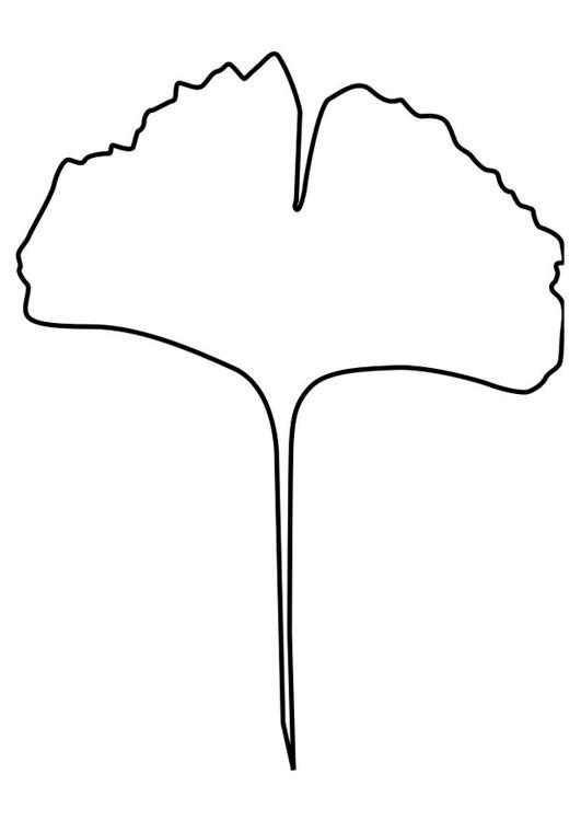 Kleurplaat ginko blad - Afb 27184.