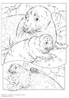 Kleurplaat grijze zeehond