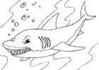 Kleurplaat haai