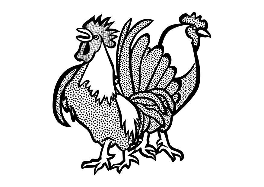 kleurplaat haan en kip afb 29642