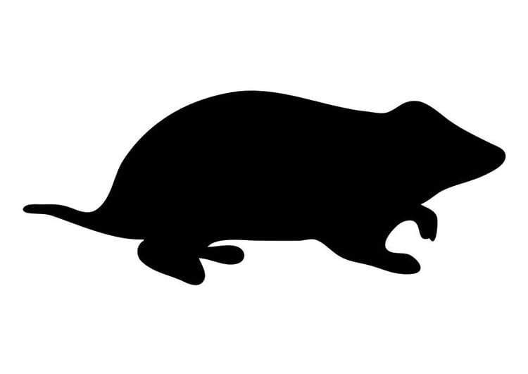 Kleurplaat Hamster Afb 10196