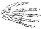 Kleurplaat hand - skelet