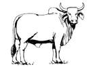 Kleurplaat heilige koe