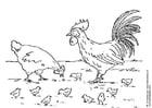 Kleurplaat hen, haan en kuikens