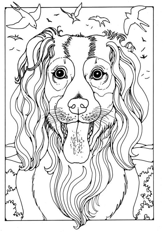 Kleine Honden Kleurplaat Kleurplaat Herdershond Afb 28212 Images