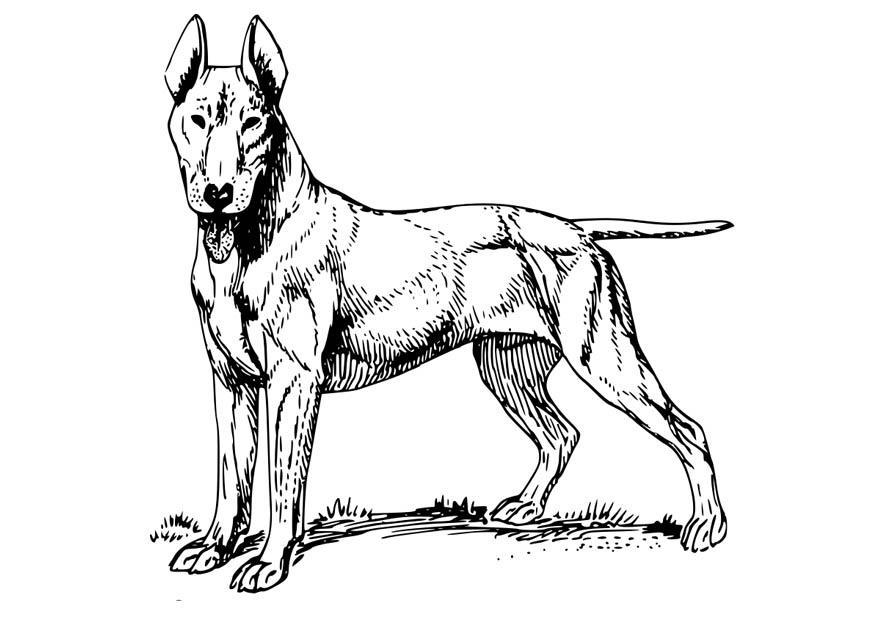kleurplaten mops honden ausmalbilder hunde 6 ausmalbilder