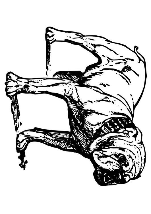 Kleurplaat Hond Bulldog Afb 18584