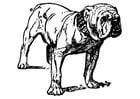 Kleurplaat hond - bulldog