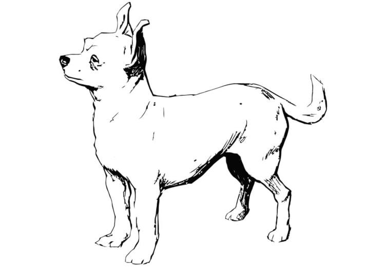 kleurplaat hond chihuahua gratis kleurplaten om te printen