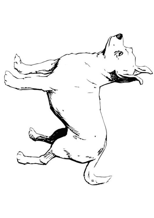 Kleurplaat Hond Chihuahua Afb 13704