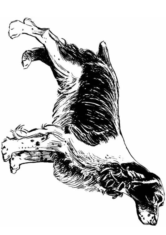 Kleurplaat Hond Cocker Spaniel Afb 13708