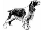 Kleurplaat hond - cocker spaniel