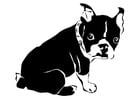 Kleurplaat hond - franse bulldog