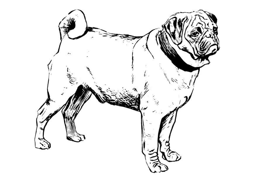 Kleurplaat Hond Mops Afb 22749