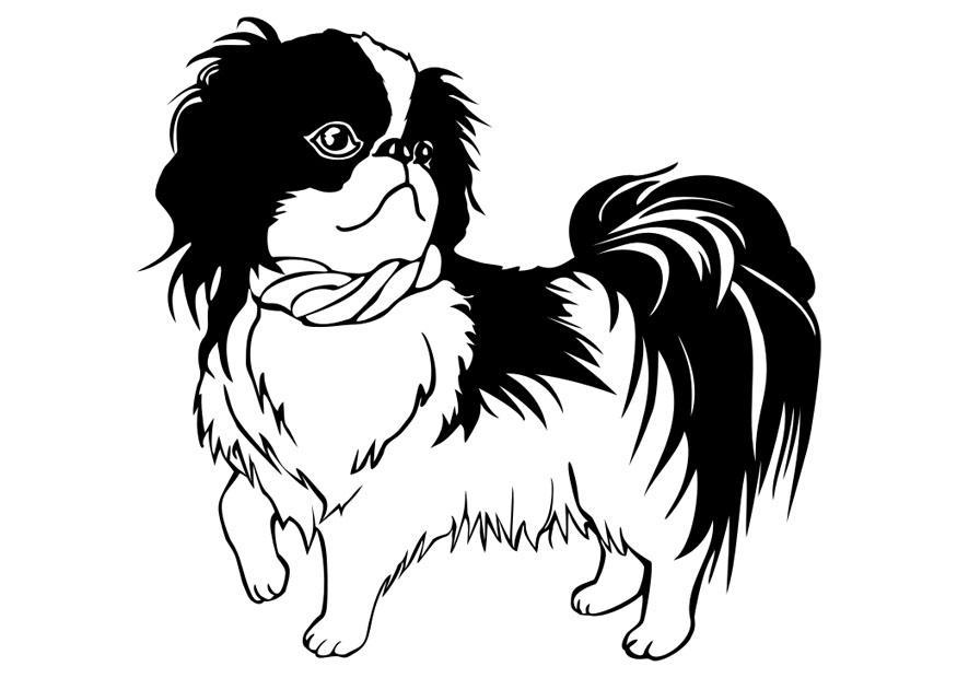 Afbeeldingen Honden Kleurplaat Kleurplaat Hond Shih Tzu Afb 29834 Images