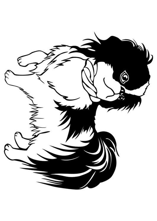 Kleurplaat Hond Shih Tzu Afb 29834
