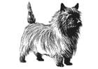 Kleurplaat hond - terrier