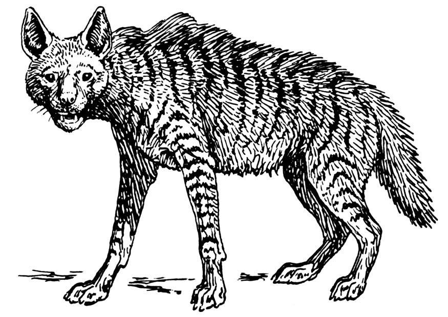 Kleurplaten Dieren Google Kleurplaat Hyena Afb 16620 Images