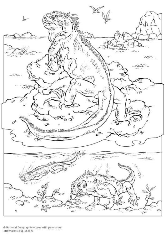 kleurplaat iguana gratis kleurplaten om te printen