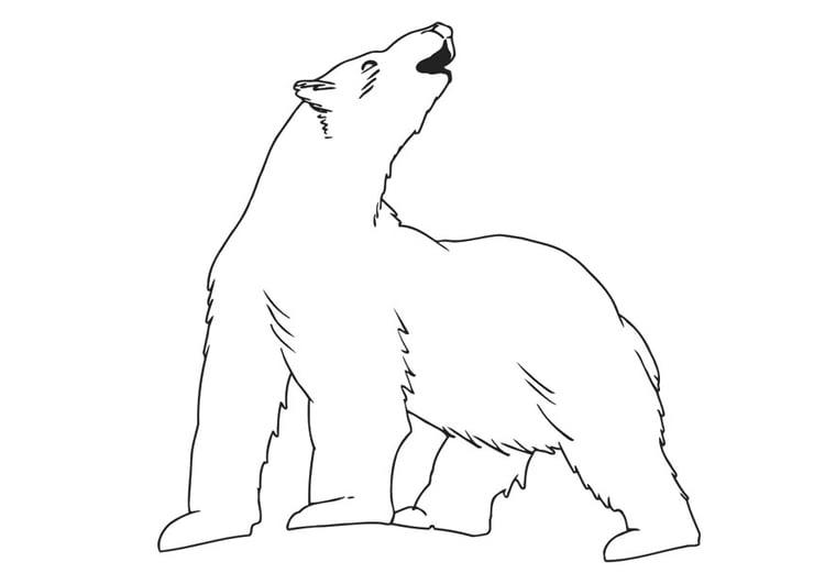 Kleurplaat Ijsbeer Afb 30139