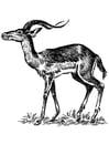 Kleurplaat impala
