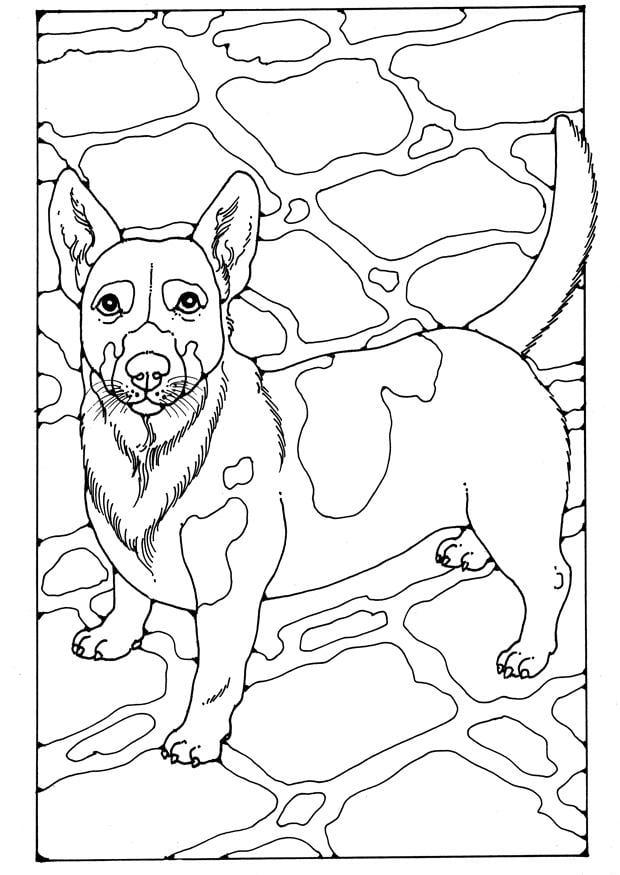kleurplaten honden jack russel