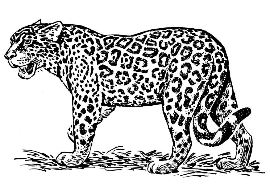 Images of Jaguar Face Clipart Black And White - #SpaceHero