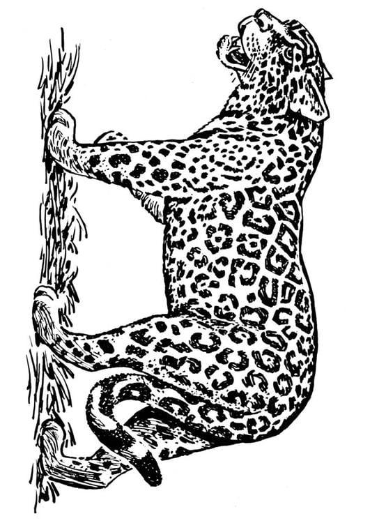Kleurplaat Jaguar Afb 16636