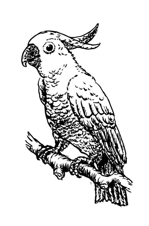 Kleurplaat Kaketoe Afb 15708 Images