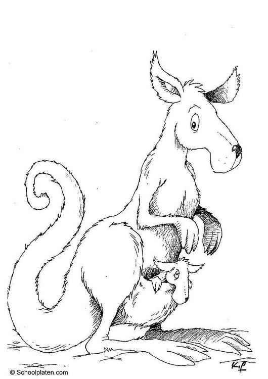 kleurplaat kangoeroe gratis kleurplaten om te printen