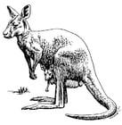 Kleurplaat Kangoeroe