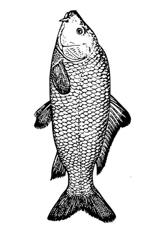 Kleurplaat Karper Afb 18581