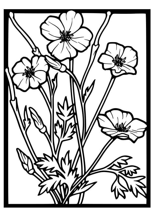 Kleurplaat Klaprozen Afb 18647
