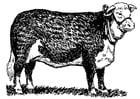 Kleurplaat koe - hereford