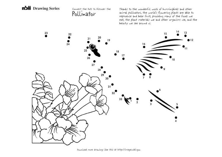 kleurplaat kolibri afb 12673