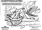 Kleurplaat Kolibrie