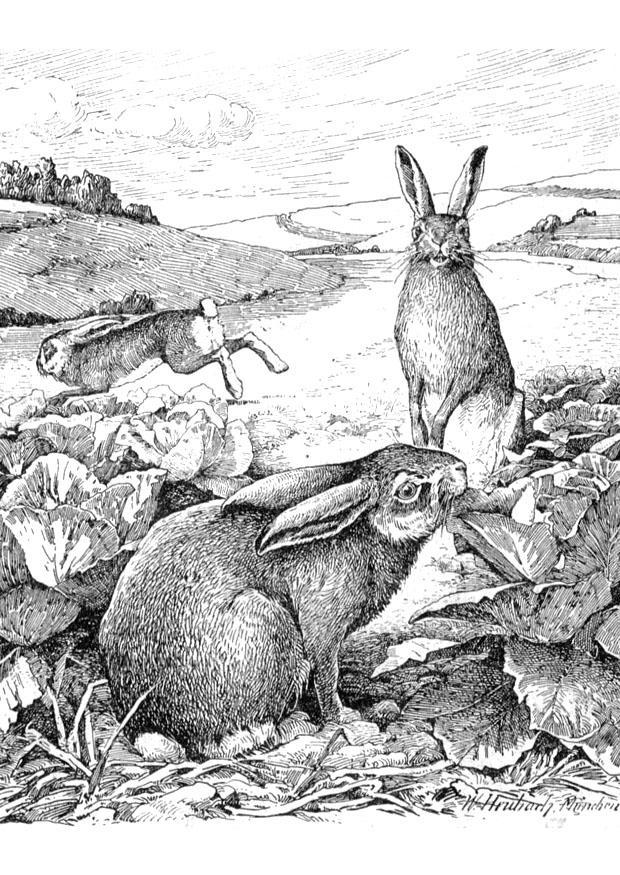 kleurplaten volwassenen konijn