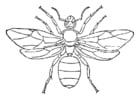Kleurplaat koningin mier