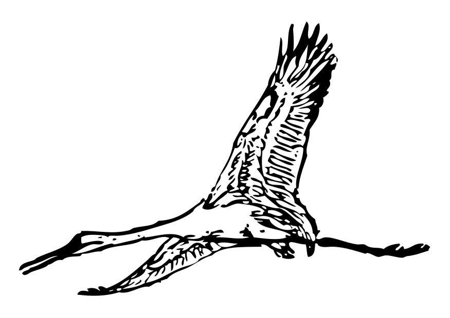 kleurplaat kraanvogel gratis kleurplaten om te printen