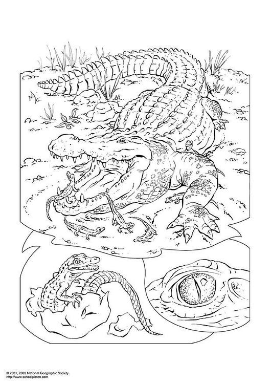 kleurplaat krokodil afb 3053