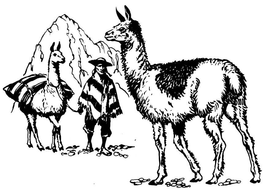 Kleurplaat Lama Afb 16626
